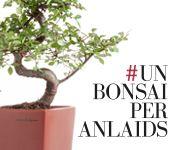 Un-Bonsai-per-Anlaids